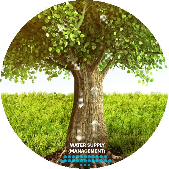 Xebia Tree V5-02.png