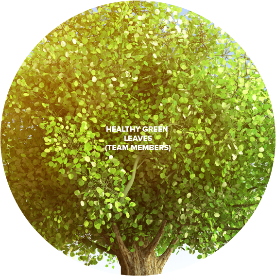 Xebia Tree V5-03.png